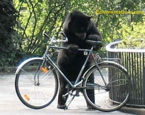 bear_stealing_bike